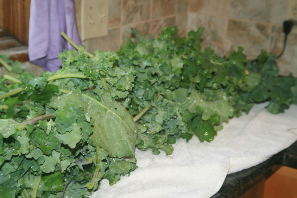 Some Kale all washed and ready for freezing!